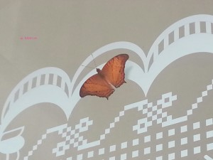 Views I saw in May/June 2014 In Singapore - Orange Butterfly