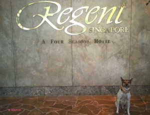 Pet Staycation At The Regent - At The Regent
