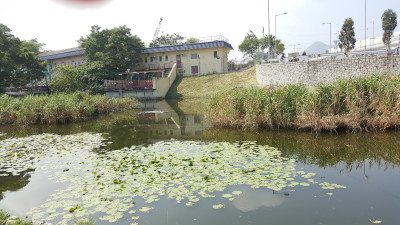 Ping Shan Heritage Trail - A pond along the trail