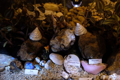 The Lost World of Terranova by The Gem Museum At Singapore Night Festival 2018 - Terrarium with shells