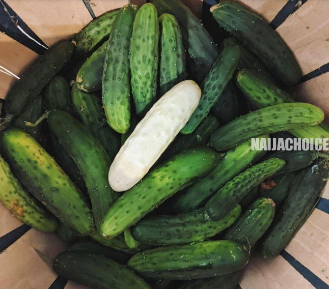 Have You Seen Or Eaten Albino Cucumbers Before? (Photos)