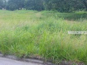 Grasses Take Over University Of Calabar Due To Lockdown (Photos)