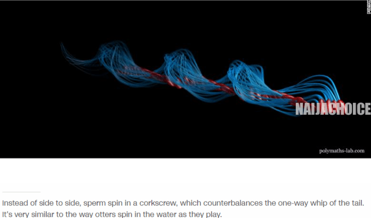 Sperm Fooled Scientists For 350 Years, They Don't Really Swim But Spin - New Study