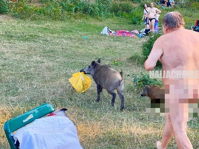 Unclad German Man Chases A Wild Boar After It Snatched His Laptop (Photos)
