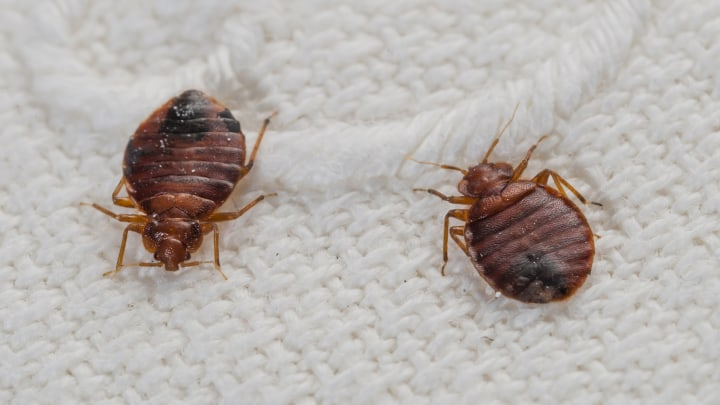 How to Get Rid of Bed Bug In a Nigerian Home