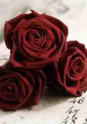 The Different Rose Colours and Their Meanings