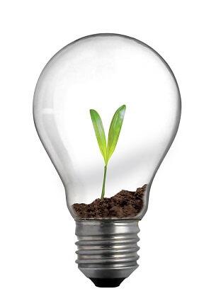 new life in light bulb