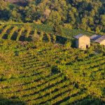 Prosecco Producers 'Caught' Manipulating Their Wines