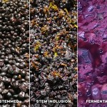 Winemaking From Start to Finish (Told in Pictures)