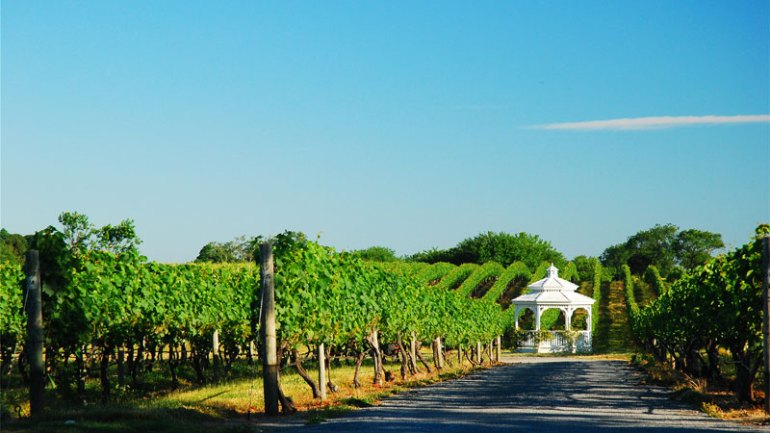 Provence is one of the best wine vacation destinations!