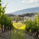 The Insider's Guide to Southern Rhône Valley Wines