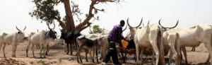 Nigeria has suffered for years with communal violence, often linked to cattle raiding