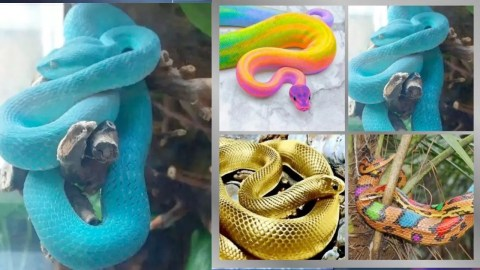 13 Beautiful Snakes That Many Will Love To Have A Look At – Pictures