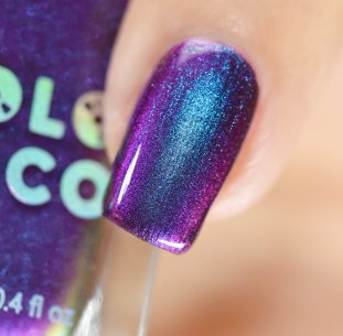 HOLO TACO PURPLE WITH ENVY 6