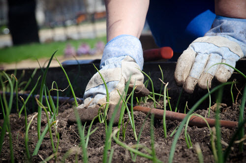 gardening-with-gloves