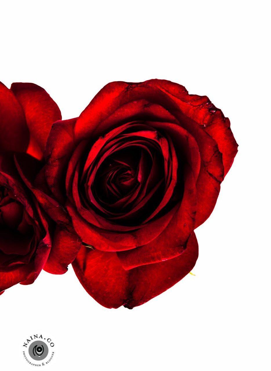 Naina.co-Raconteuse-Visuelle-Photographer-Blogger-Storyteller-Luxury-Lifestyle-March-2015-Roses-Art-Prints