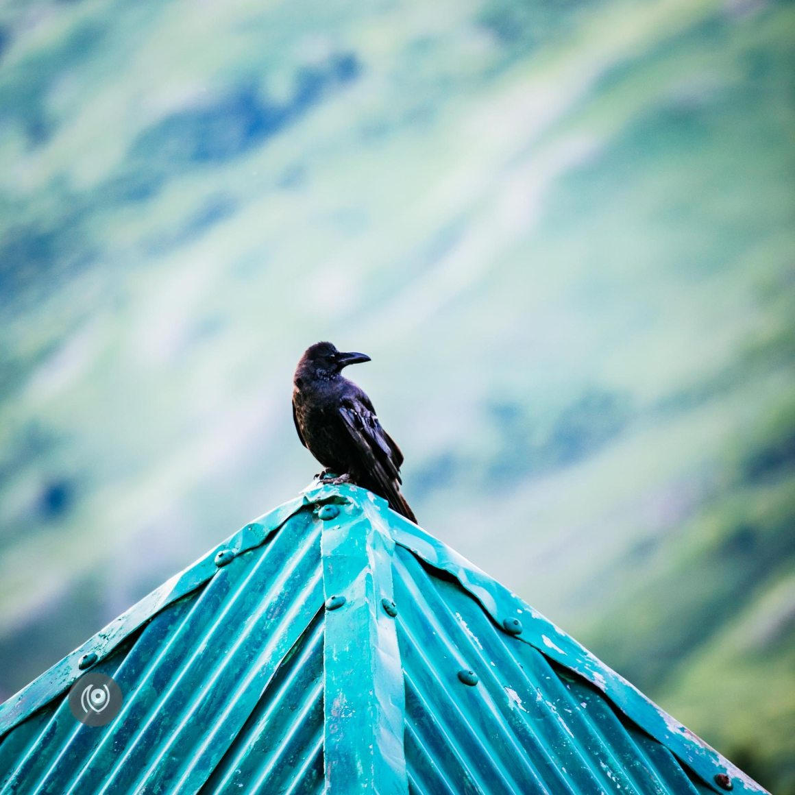 Ravens in Kashmir, EyesForDestinations, Travel, Naina.co Luxury & Lifestyle, Photographer Storyteller, Blogger.