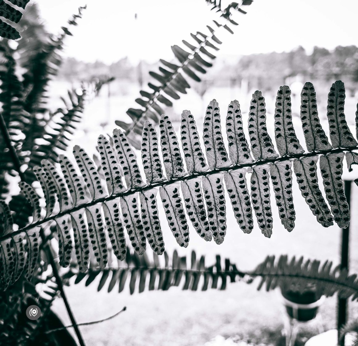 Ranikhet, Uttarakhand, EyesForDestinations, EyesForIndia, EyesForRanikhet, EyesForUttarakhand, NainaxRanikhet, Travel Photographer, Destination Photographer, Travel Photography, Destination Photography, Resort, Hospitality, Lifestyle, Travel Blogger, Lifestyle Blogger, Vacation, Road Trip, India, Professional Photographer, Luxury, Lifestyle, Blogger, Feature, Story, Golf Course