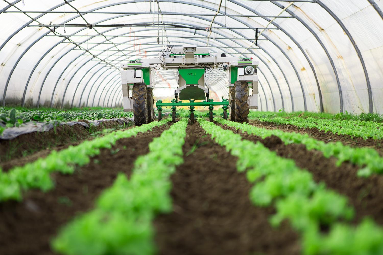 Large Scale Vegetable Weeding Robot