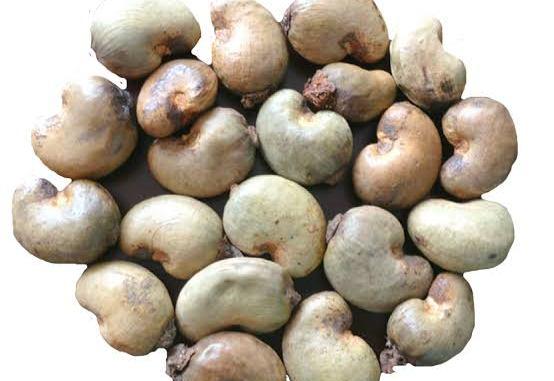 Cashew nut business