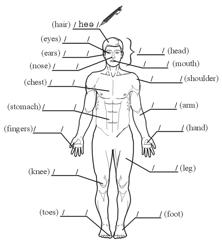 labeled diagram human body in japanese