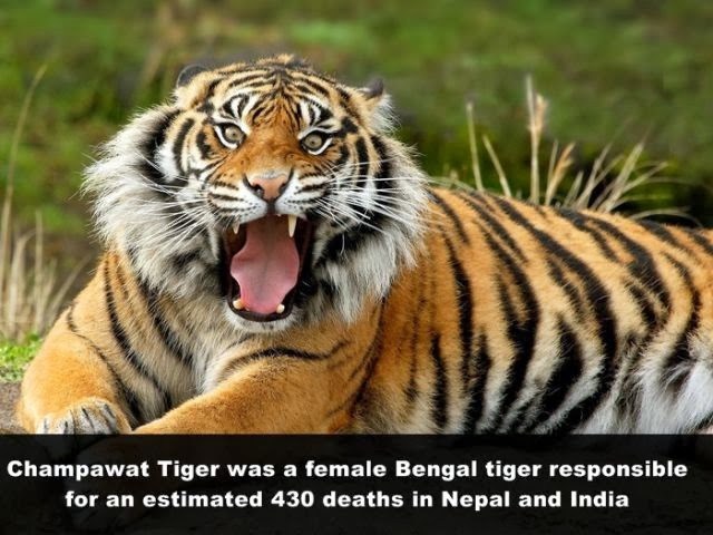 unusual facts that are