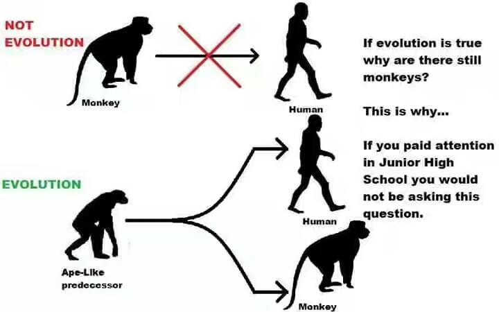 If We Evolved From Monkeys, Why Are There Still Monkeys