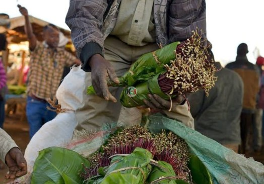 Lifts Ban On Miraa Imports From Kenya