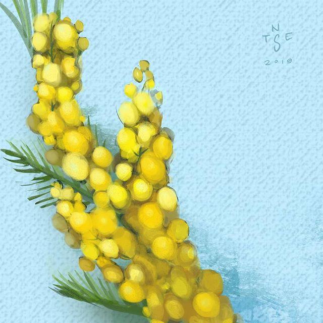 Acacia Flower Timelapse Painting