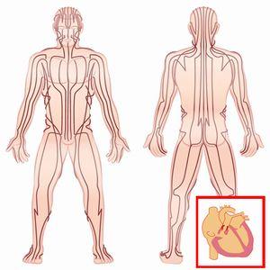 骨盤矯正で全身の歪みを整える大切さを紹介する図