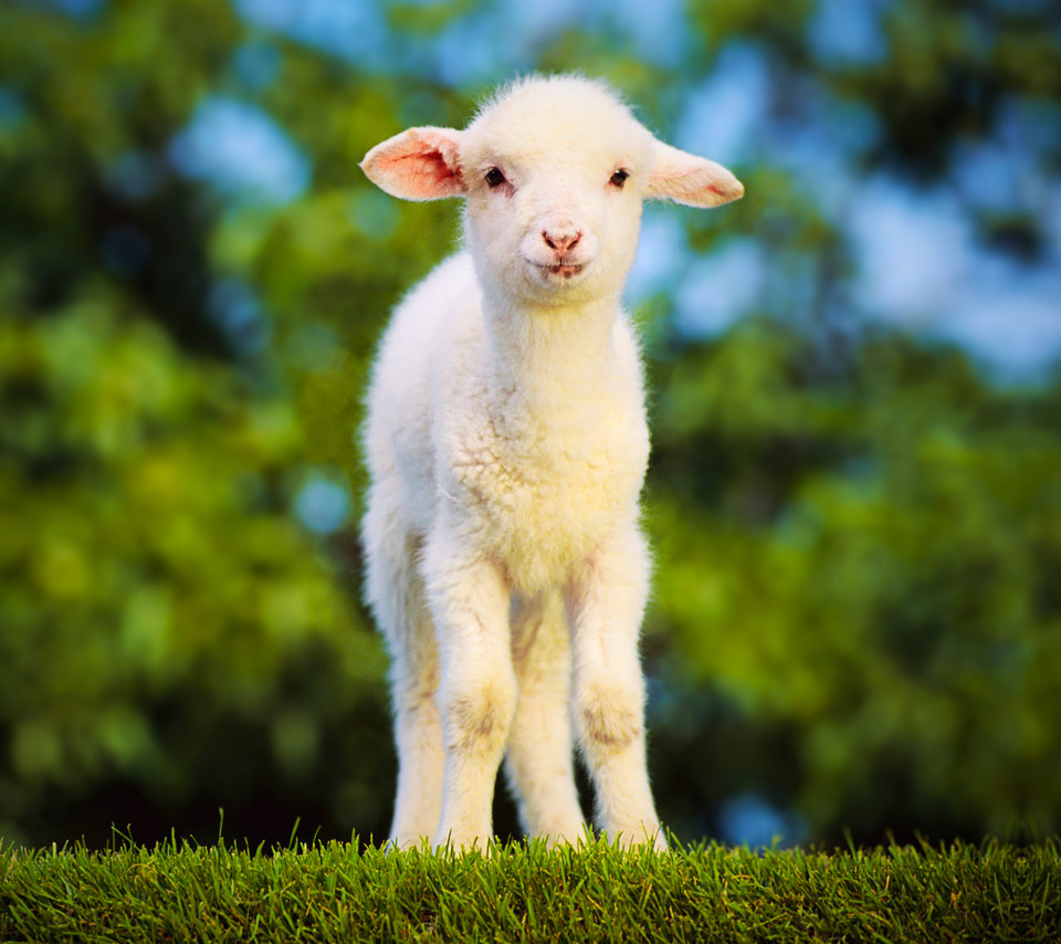 Cute Goat Wallpaper Links 4 6 15 Naked Capitalism
