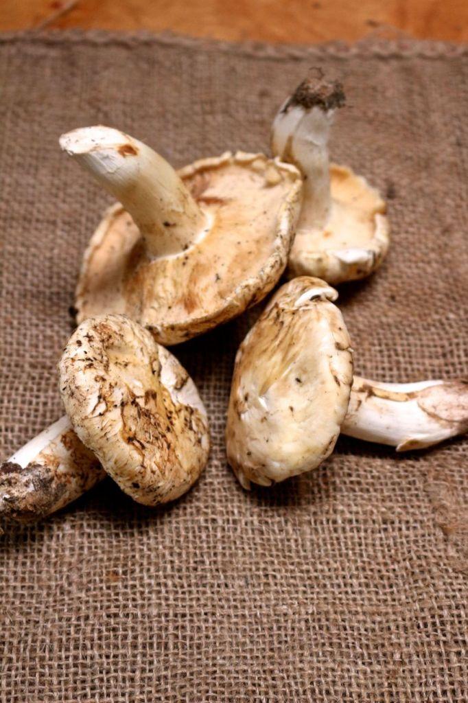 creamy pine mushroom pasta