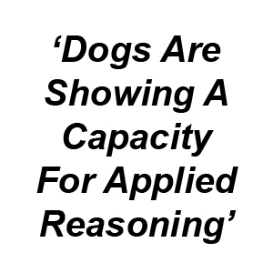 Dogs show reasoning capacity