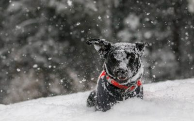 10 Winter Care Tips For Your Dog