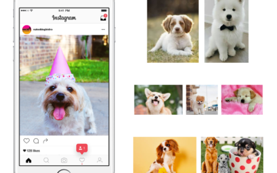 15 Dog Instagram Accounts You Definitely Need to Start Following