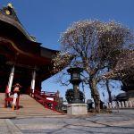 Yulan magnolia and the temple of Sarasvatī