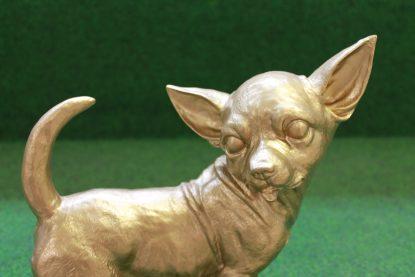 Gouden Chihuahua