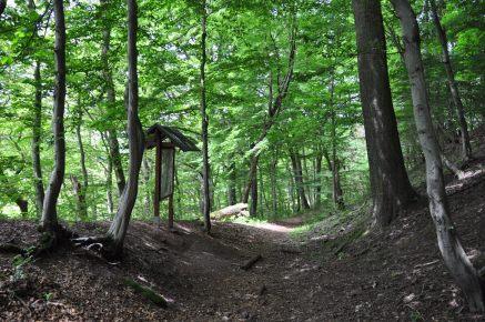 Wanderweg vom Hausberg