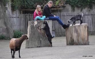 Streichenzoo mit Ziegen