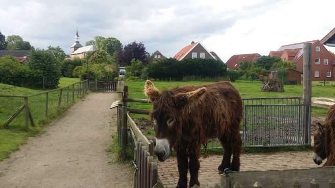 Esel im Haustierpark