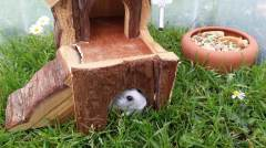 Hamster im Bau