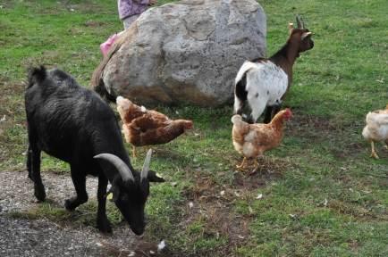 Tiere auf dem Hof