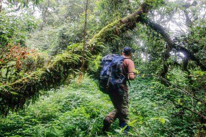 wildlife-treking-namet-phoulouey-cloud-forest