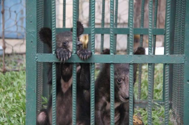 NEPL-NamNern-Free-bears-laos-1