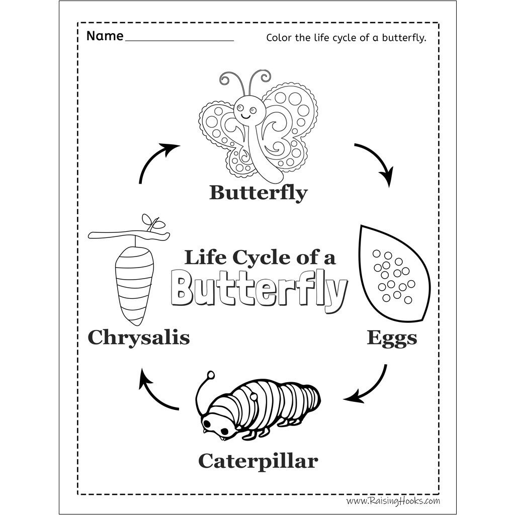 Butterfly Life Cycle Tracing Worksheet