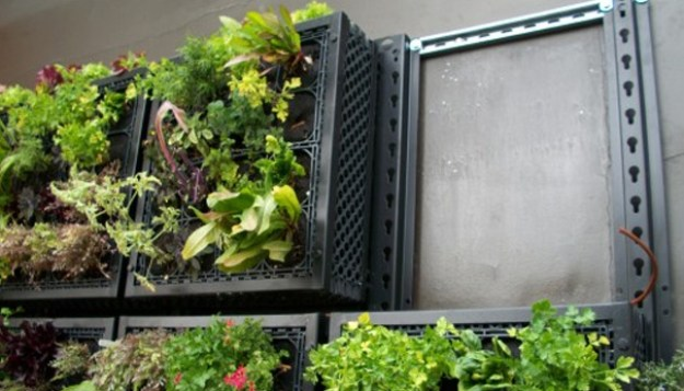 an-edible-living-wall-by-tournesol-siteworks-large2