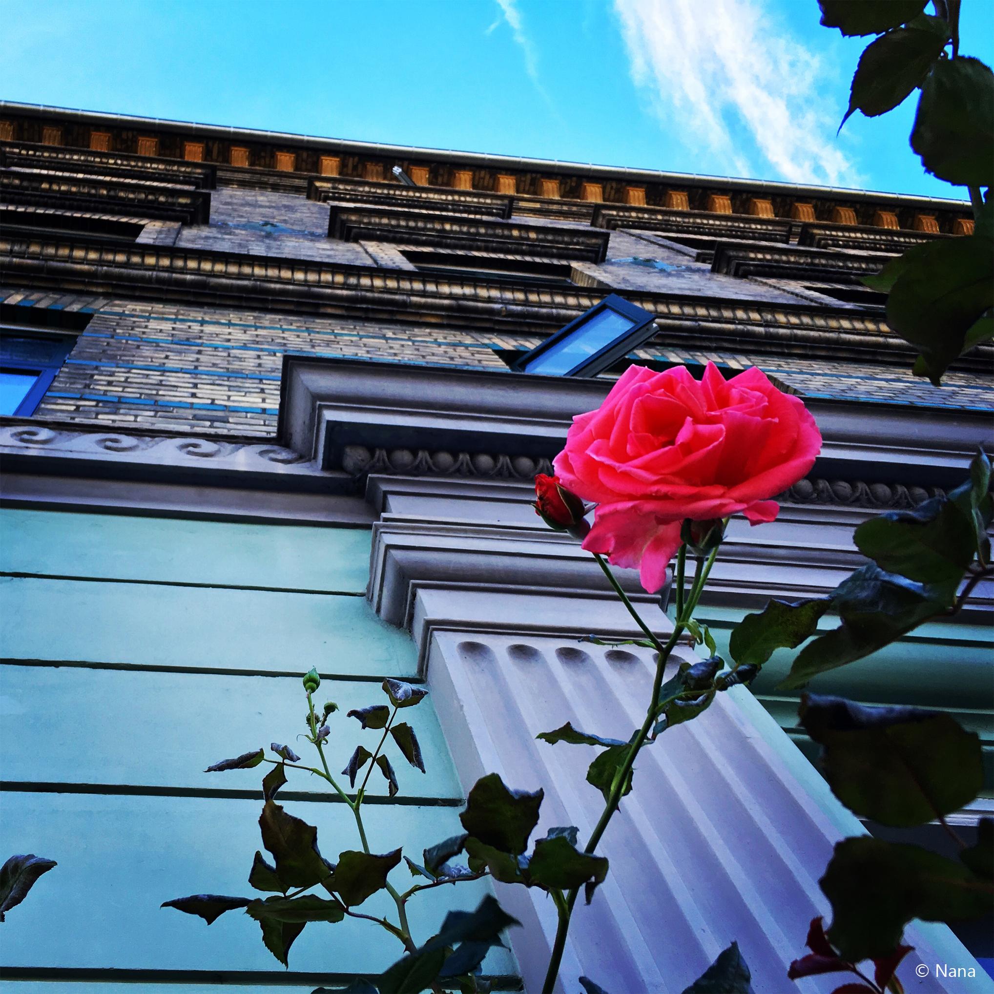Blomst I København