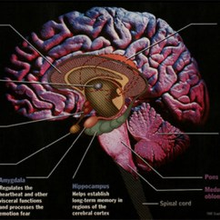Left Side Brain Functions Diagram Wiring For Rv Ac Unit Biofeedback & Neurofeedback | Mind Therapy Center