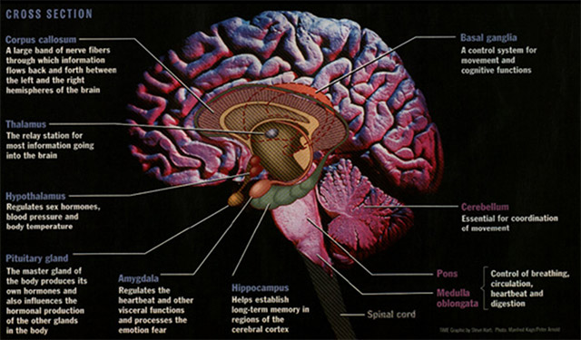 left side brain functions diagram rheem wiring diagrams for thermostat biofeedback & neurofeedback | mind therapy center