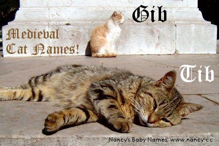 Cat Names Gib and Tib